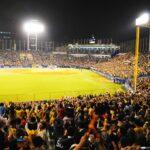 野球イベントの企画・運営